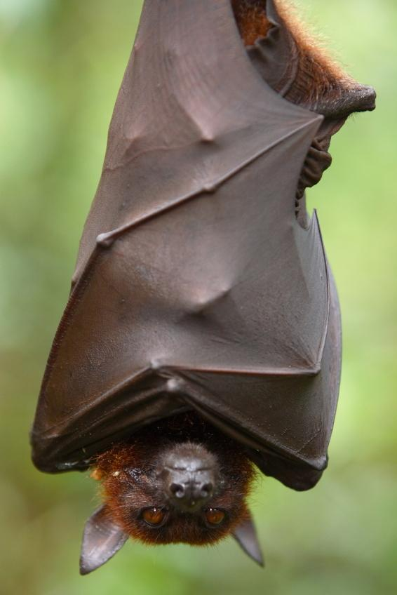 When I revisited the Batty Bat Dance  (1/2)