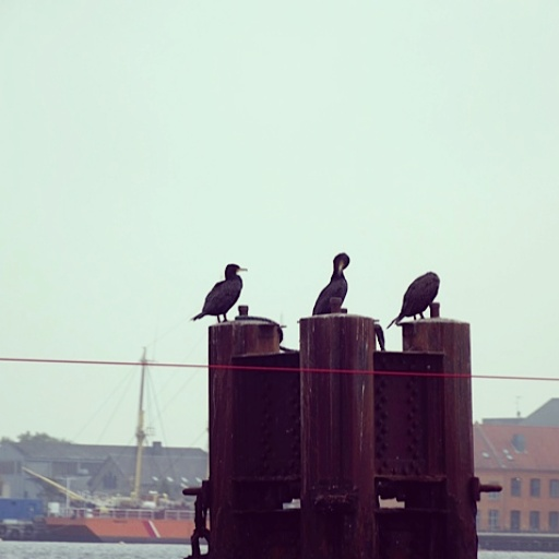 Birds preen themselves on nests just inside the cordoned off part of Copenhagen waters, where the military play with their big ships